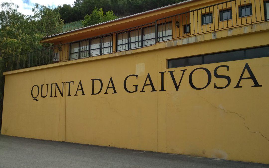 TASTING at QUINTA DA GAIVOSA